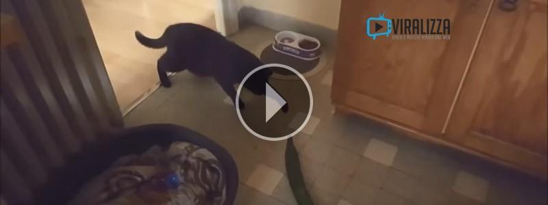 Gatti Terrorizzati Dai Cetrioli Video Viralizza